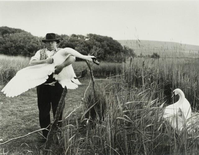 Человек и лебеди, 1961. Фотограф Робер Дуано