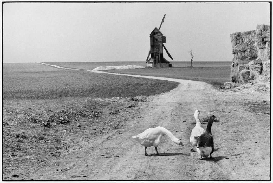 Гуси. Регион Бос, Франция, 1960. Фотограф Анри Картье-Брессон