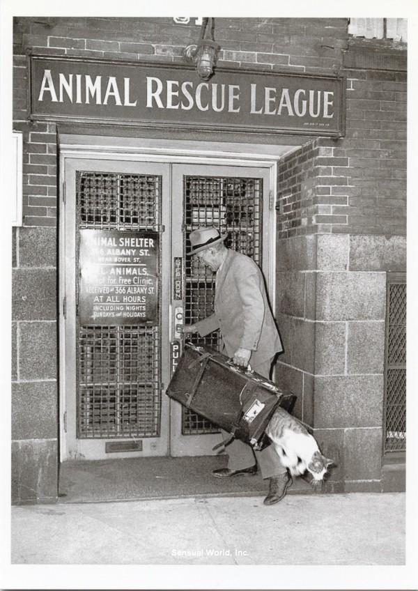 Дерзкий побег из Лиги защиты животных, Бостон, 1940