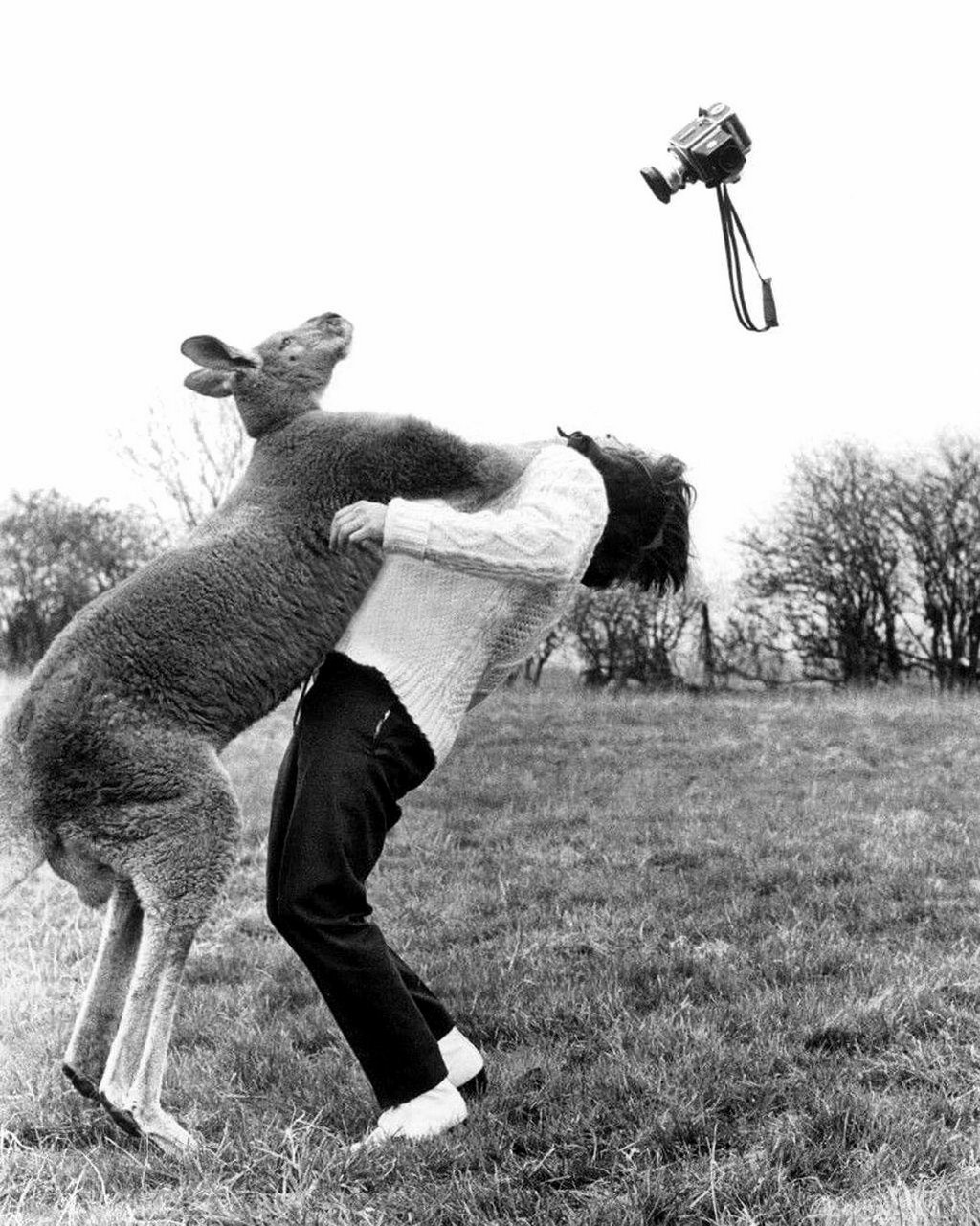 Кенгуру против фотографа, Англия, 1967. Фотографы Воллер Эрнст и Джон Дрисдейл