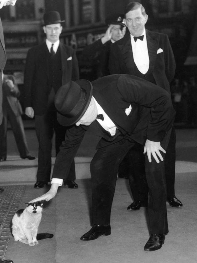 Уинстон Черчилль гладит кошку на Ливерпуль-стрит, Лондон, 24 мая 1952 года