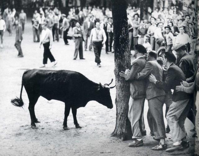 Встреча с быком. Байонна, Франция, 1950-е. Фотограф Джастин Локк