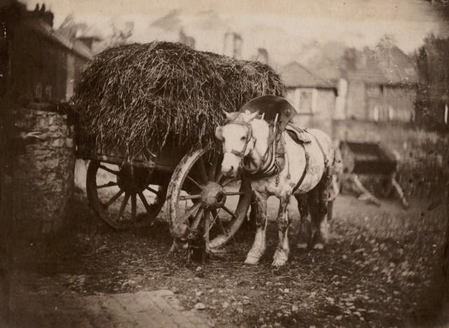 Лошадь и телега с сеном, Бристоль, Великобритания, 1850-е. Фотограф Джон Беван Хазард