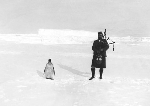 Гилберт Керр, член шотландской Национальной антарктической экспедиции, играет на волынке для пингвина, 1904
