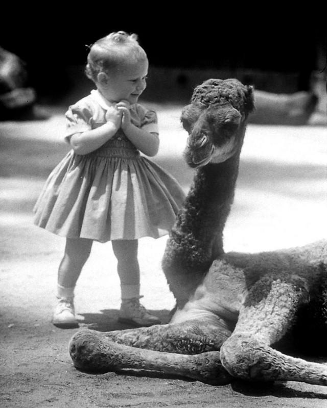 Девочка, восхищённая верблюжонком в зоопарке Сан-Диего, 1959. Фотограф Аллан Грант