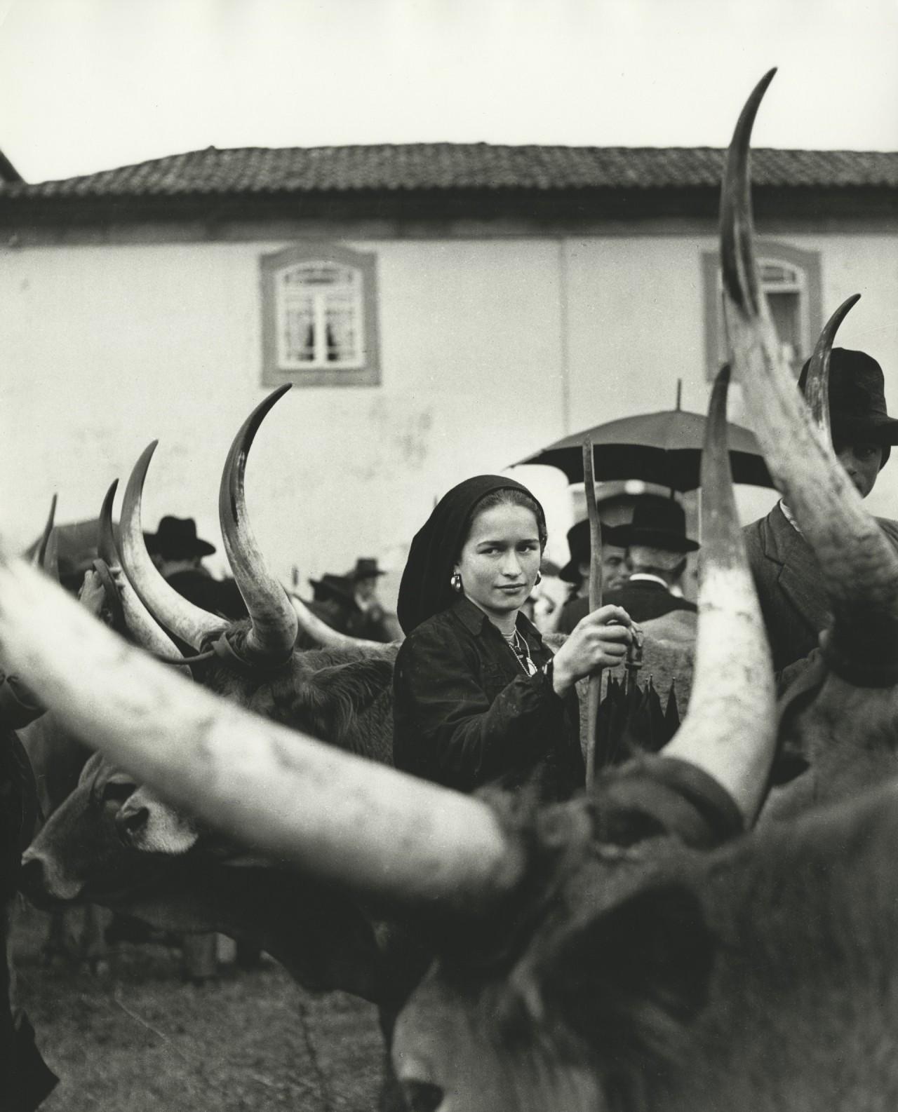 Девушка с волами. Португалия, 1952. Фотограф Ормонд Джильи