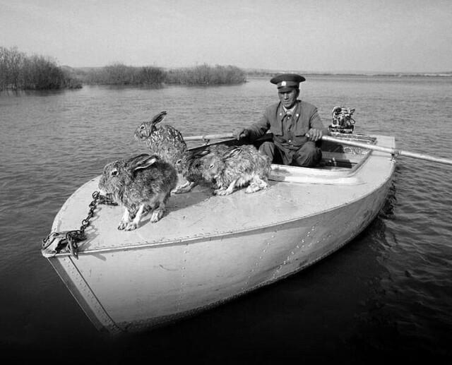 Егерь со спасёнными зайцами во время наводнения в Башкирии, 1979