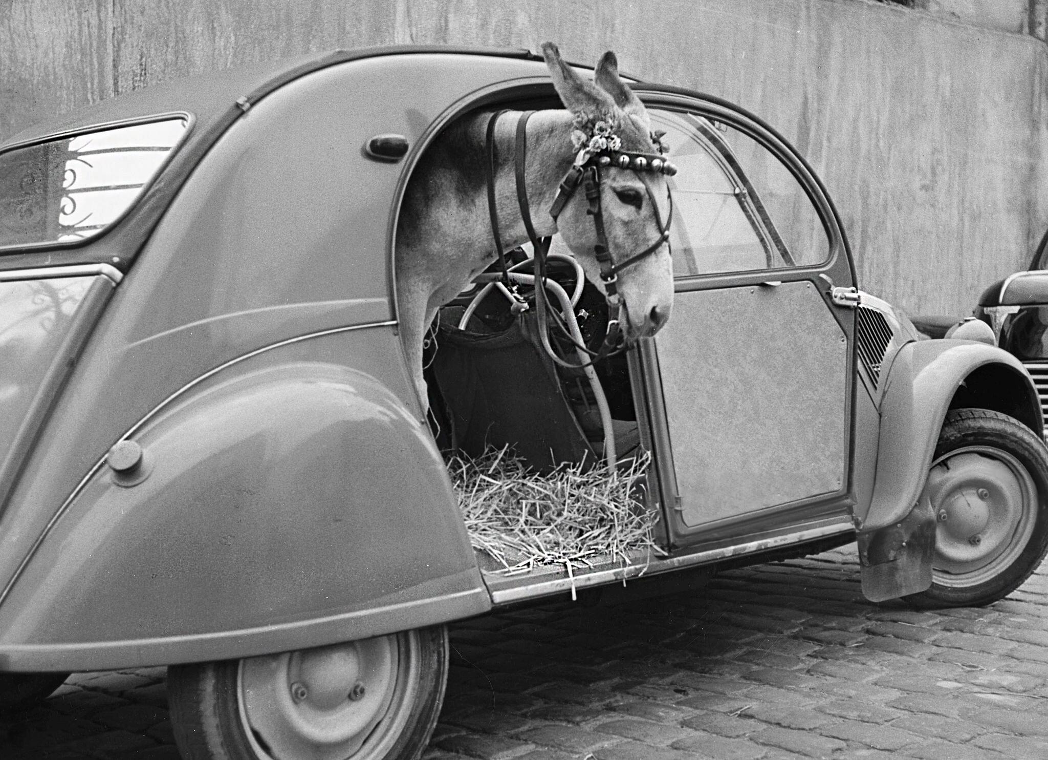 Осёл в микролитражном Citroën 2CV. Франция, ок. 1950. Из коллекции агентства Roger Viollet
