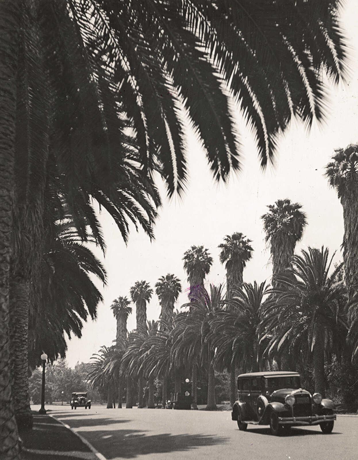 Беверли-Хиллз, Калифорния, 1936. Фотограф Альфред Эйзенштадт