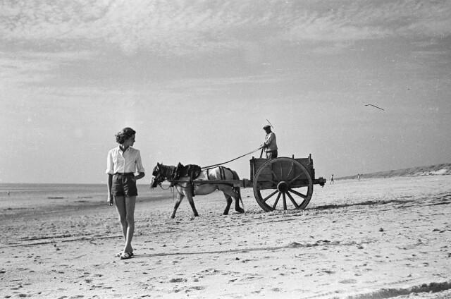 Сборщик водорослей, 1951. Фотограф Марк Хелд
