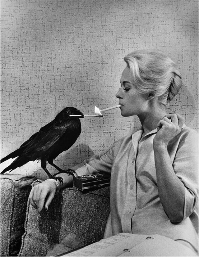 Типпи Хедрен и ворон Бадди, с которым актриса сдружилась на съёмках фильма Альфреда Хичкока «Птицы», 1963. Фотограф Филипп Халсман
