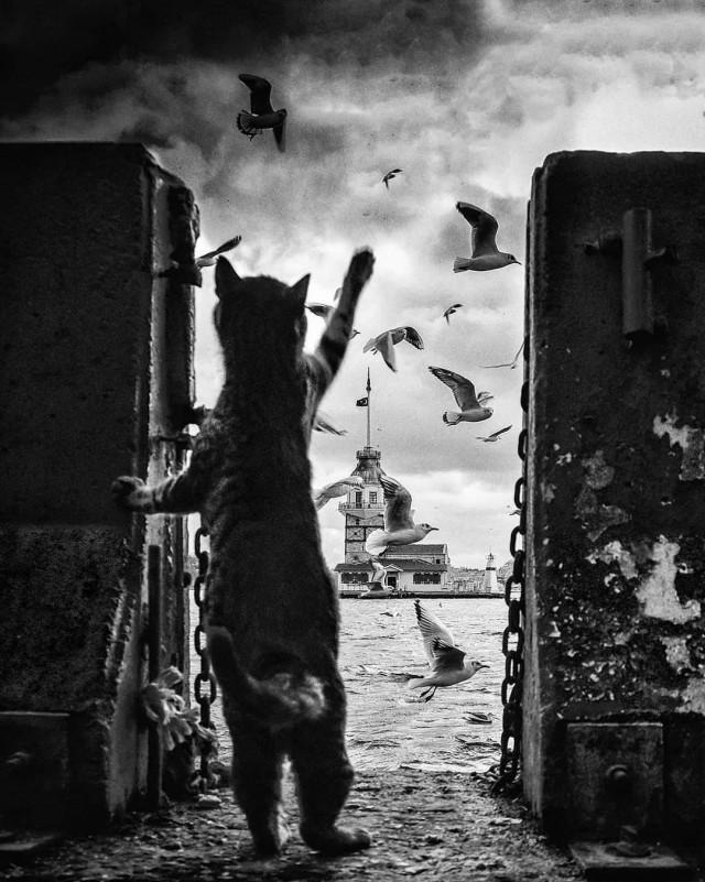 Кот приветствует чаек в Стамбуле. Фотограф Яшар Коч (Yaşar Koç)