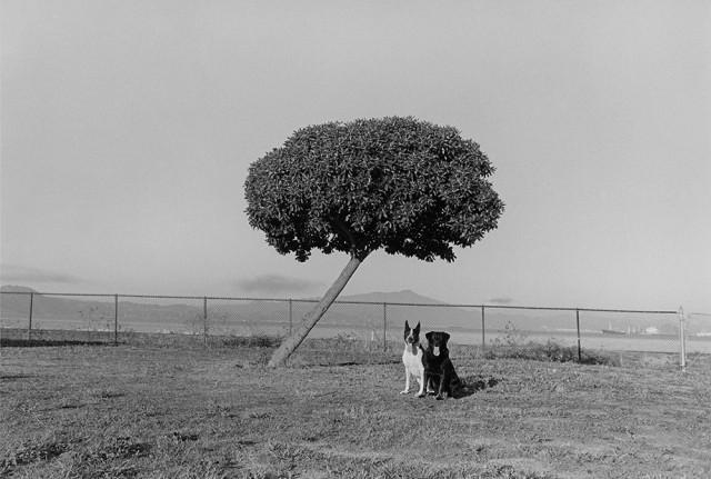 «Пико и Таша», 1986. Фотограф Генри Вессель