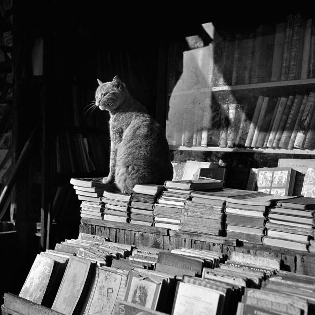 «Хранитель книг». Барселона, 1953. Фотограф Франсеск Катала-Рока