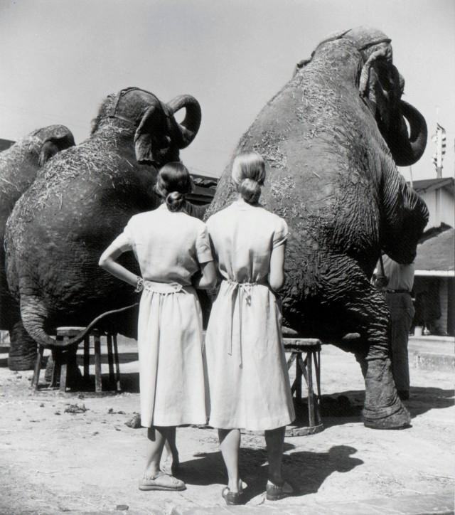 Близнецы со слонами, Сарасота, 1947. Фотограф Луиза Даль-Вульф