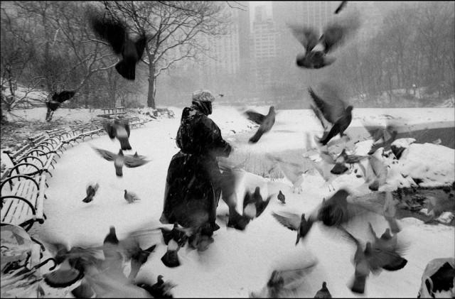 Лола с птицами в заснеженном Центральном парке, Нью-Йорк, 1992. Фотограф Брюс Дэвидсон
