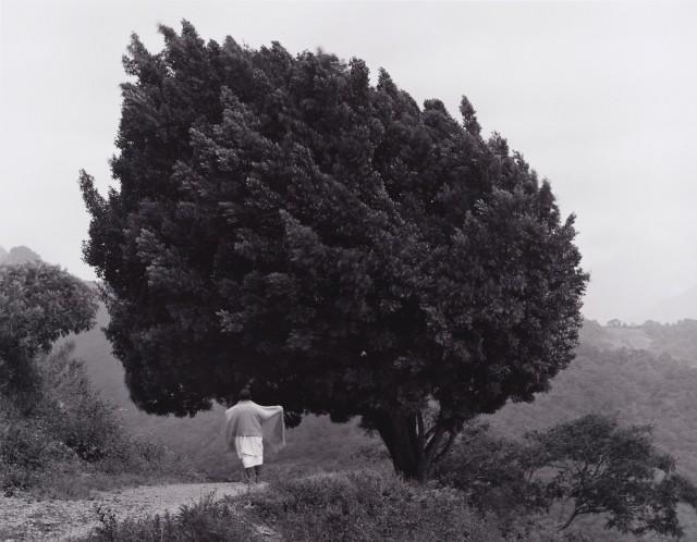 Дерево, Мексика, 1983. Фотограф Флор Гардуньо