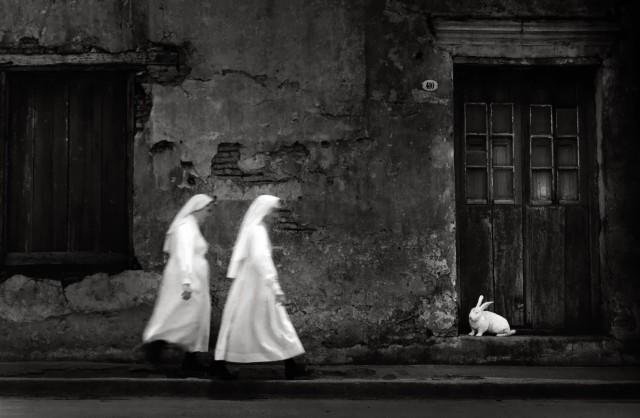 «Белый кролик». Фотограф Педро Луис Раота