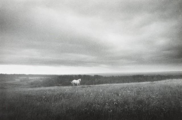 Пейзаж с белой лошадью, Беломорье, 1992. Фотограф Светлана Тимофеева