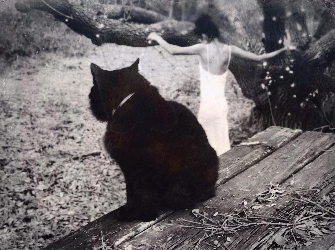Чёрный кот. Фотограф Дэвид Алан Харви