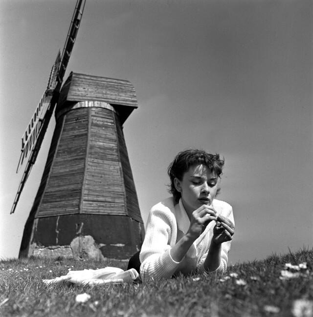 Одри Хепбёрн в поле с ветряной мельницей, Суссекс, Англия, 1951