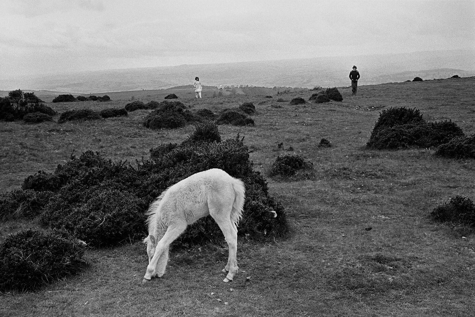 Дикий пони и туристы. Блэк-Маунтинс, Уэльс, Великобритания, 1974. Фотограф Дэвид Хёрн