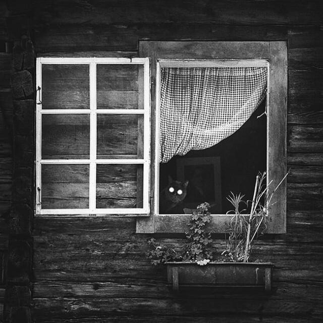 Открытое окно. Фотограф Андо Фукс