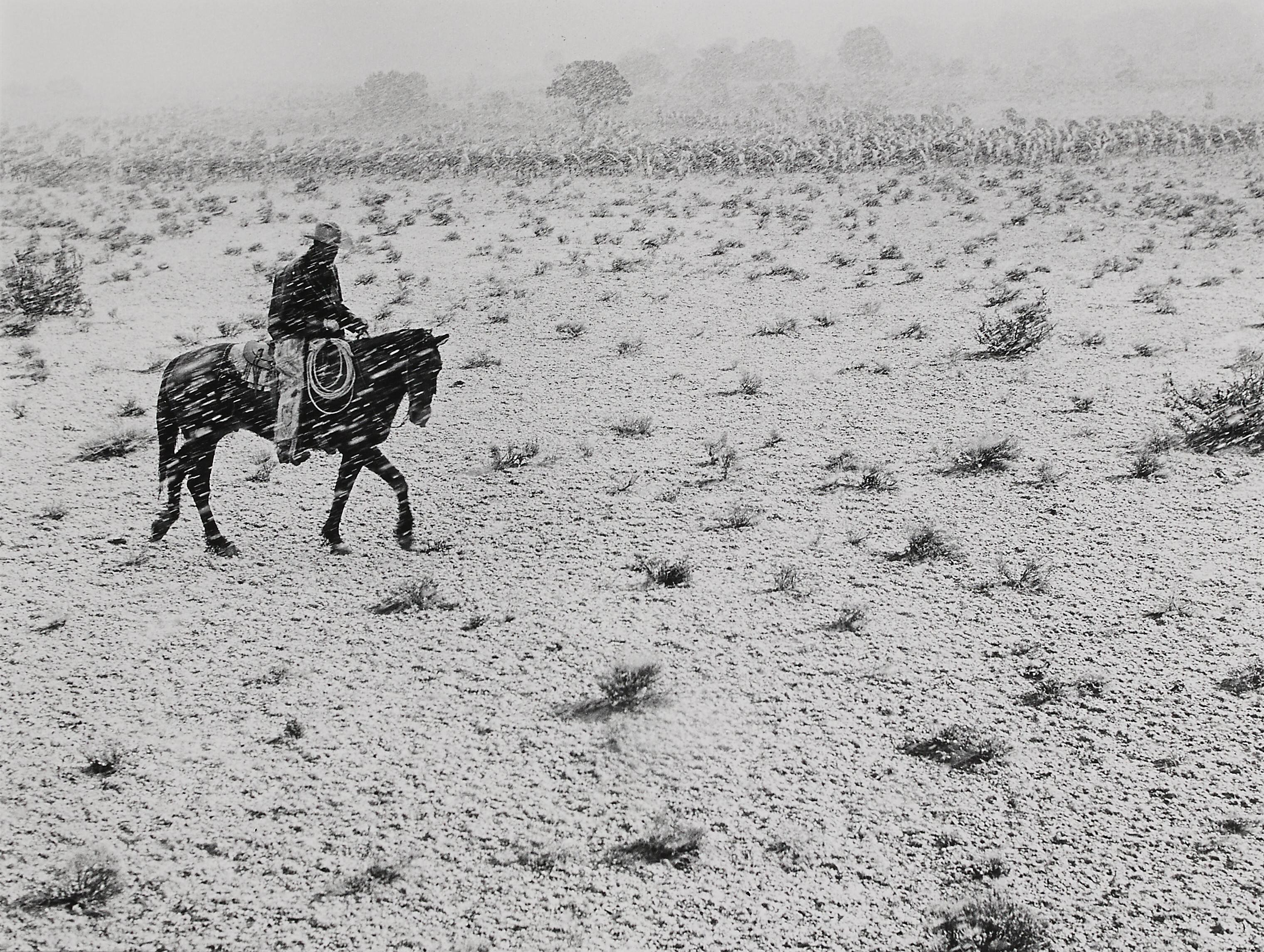 Ковбой, Аризона, 1957. Фотограф Пиркл Джонс