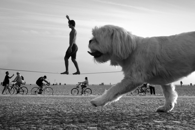 «Пошевеливайся». Фотограф Мойзес Леви