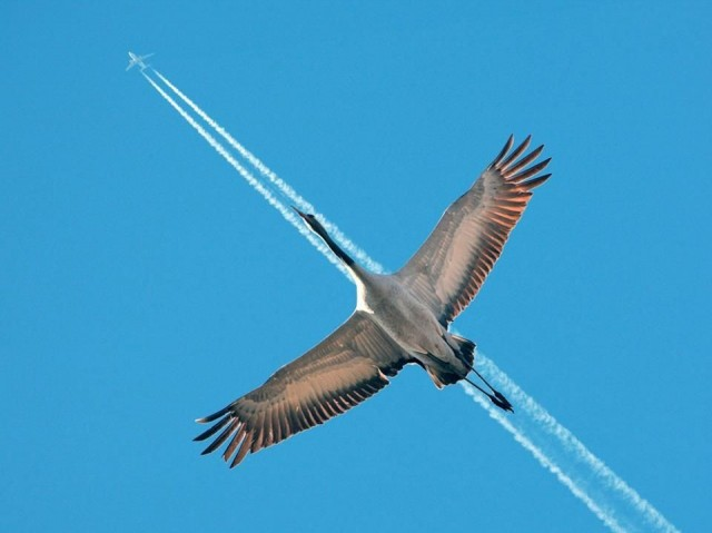 «Птица-самолёт». Фотограф Питер Дам