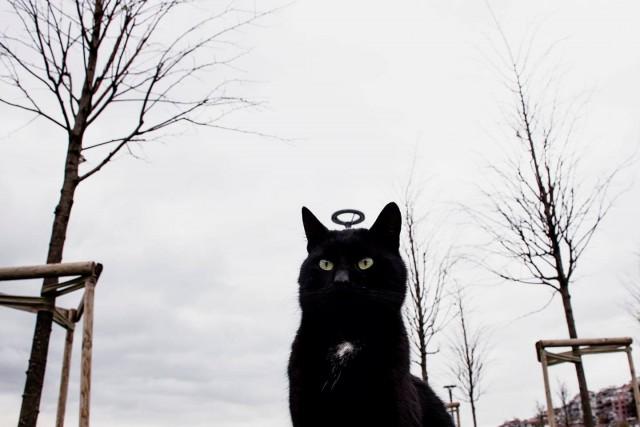 Святой кот. Фотограф Серкан Текин
