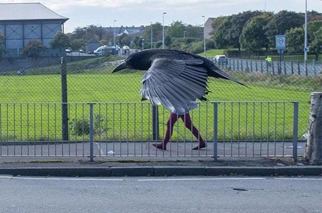 «Человек-ворона». Фотограф неизвестен