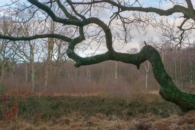 Сплетение ветвей. Фотограф Денис Черим