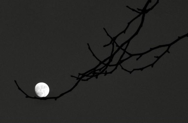 Лунная колыбель. Фотограф Алан Шаллер
