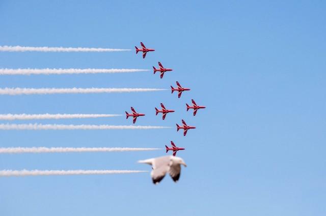 Чайка и «Красные стрелы» (пилотажная группа Королевских ВВС Великобритании). Фотограф Джейд Коксон