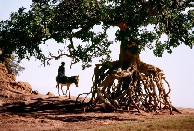Сахель, Мали. Автор Стив Маккарри