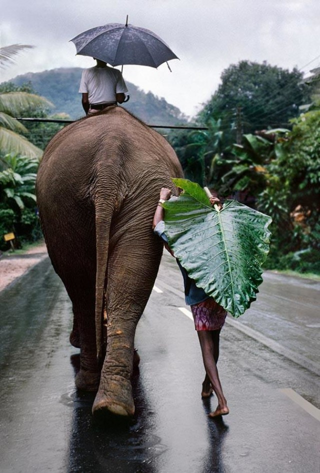 Шри-Ланка, 1995. Автор Стив Маккарри