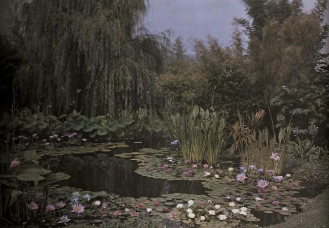 Садовый пруд с водяными лилиями. Автохром, фотограф Франклин Прайс Нотт