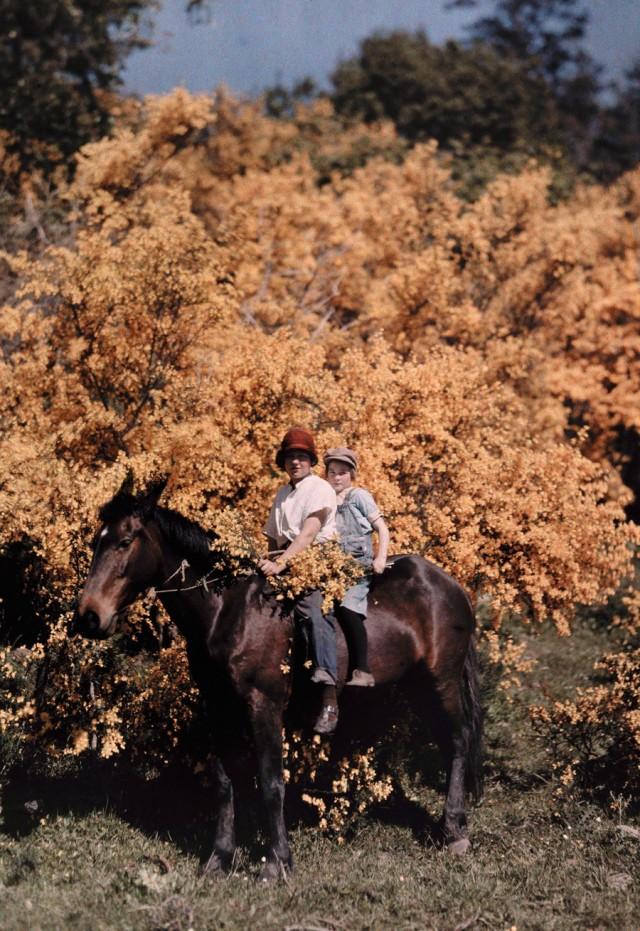 Дети на лошади в Кресент-Сити, Калифорния, 1929. Автохром, фотограф Чарльз Мартин