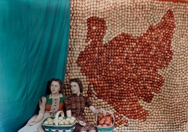 Витрина с яблоками в форме индейки, Западная Вирджиния, 1939. Автохром, фотограф Б. Энтони Стюарт