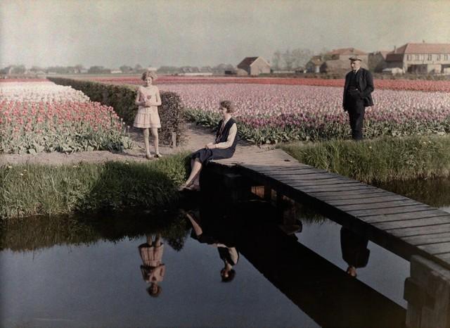 Поля тюльпанов вдоль канала в Харлеме, Нидерланды, 1931. Автохром, фотограф Вильгельм Тобиен