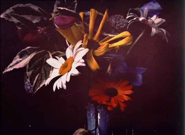 Цветы, ок. 1910. Автохром, фотограф Джон Ядерстрём