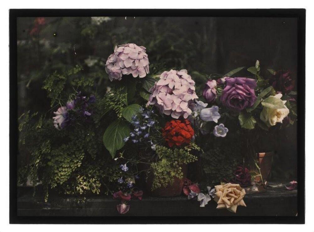 Садовые цветы, автохром, ок. 1910 – 1920