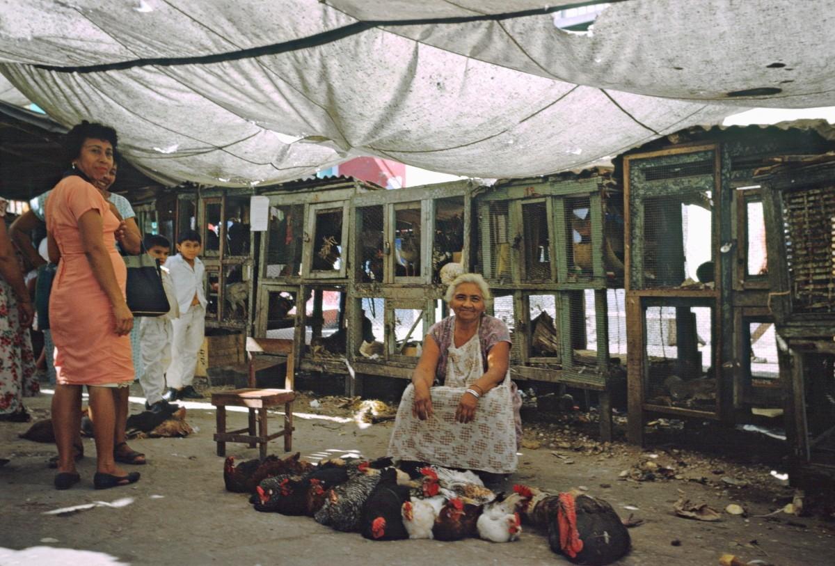 Птичий рынок, Мехико, Мексика, 1965. Автор Мартин Карплус
