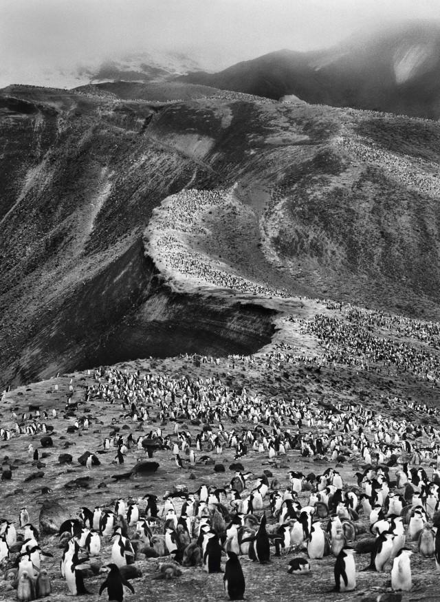 Остров Десепшен, 2005. Автор Себастьян Сальгадо