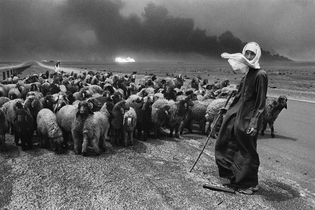 Пастухи и стадо, Кувейт, 1991. Автор Себастьян Сальгадо