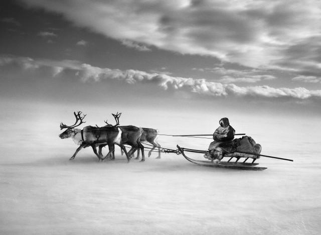 На оленьей упряжке через замёрзшую Обь, Сибирь, Россия, 2011. Автор Себастьян Сальгадо