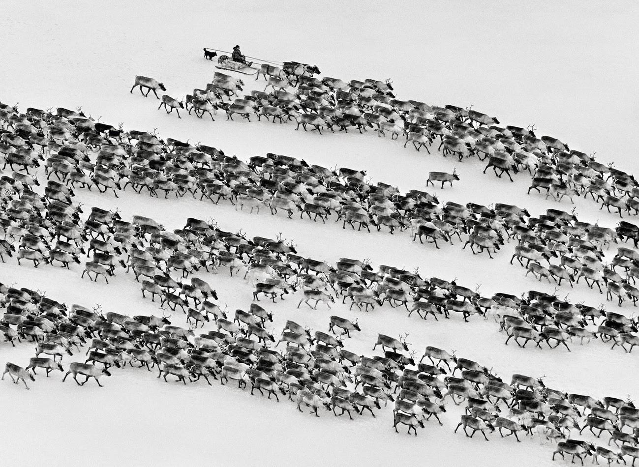 Ненцы российской Арктики, 2011. Автор Себастьян Сальгадо