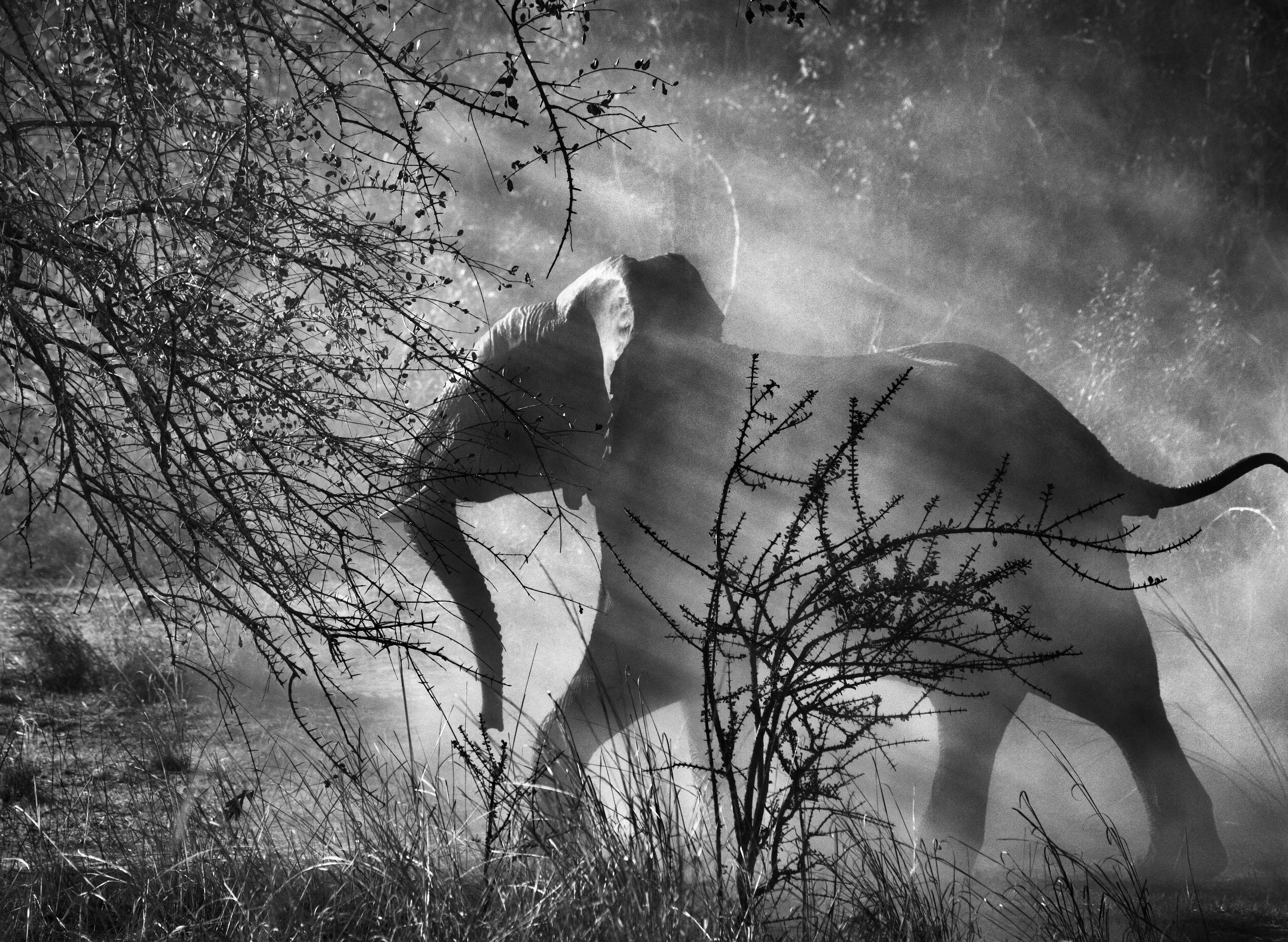 Африканский слон в национальном парке Кафуэ, Замбия, 2010. Автор Себастьян Сальгадо