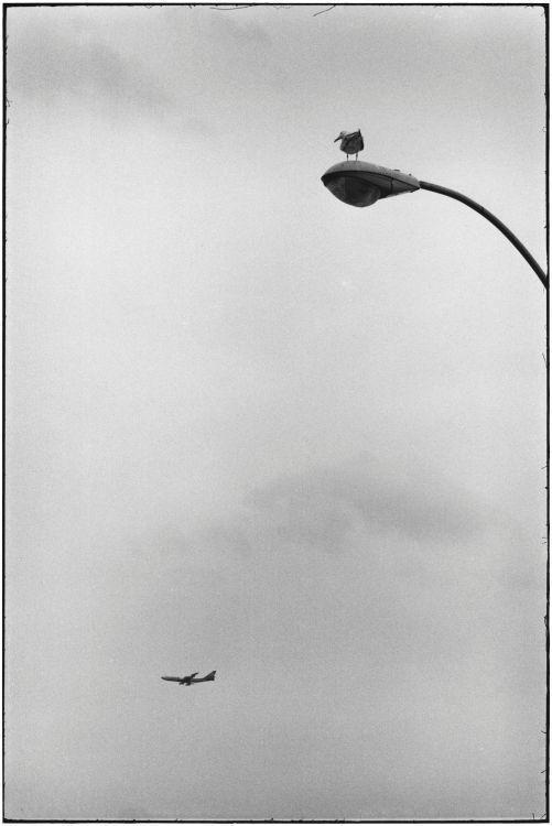 Кони-Айленд, Нью-Йорк, 1975. Автор Эллиотт Эрвитт